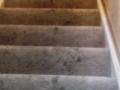 McLaughlin-Carpetb4-Image