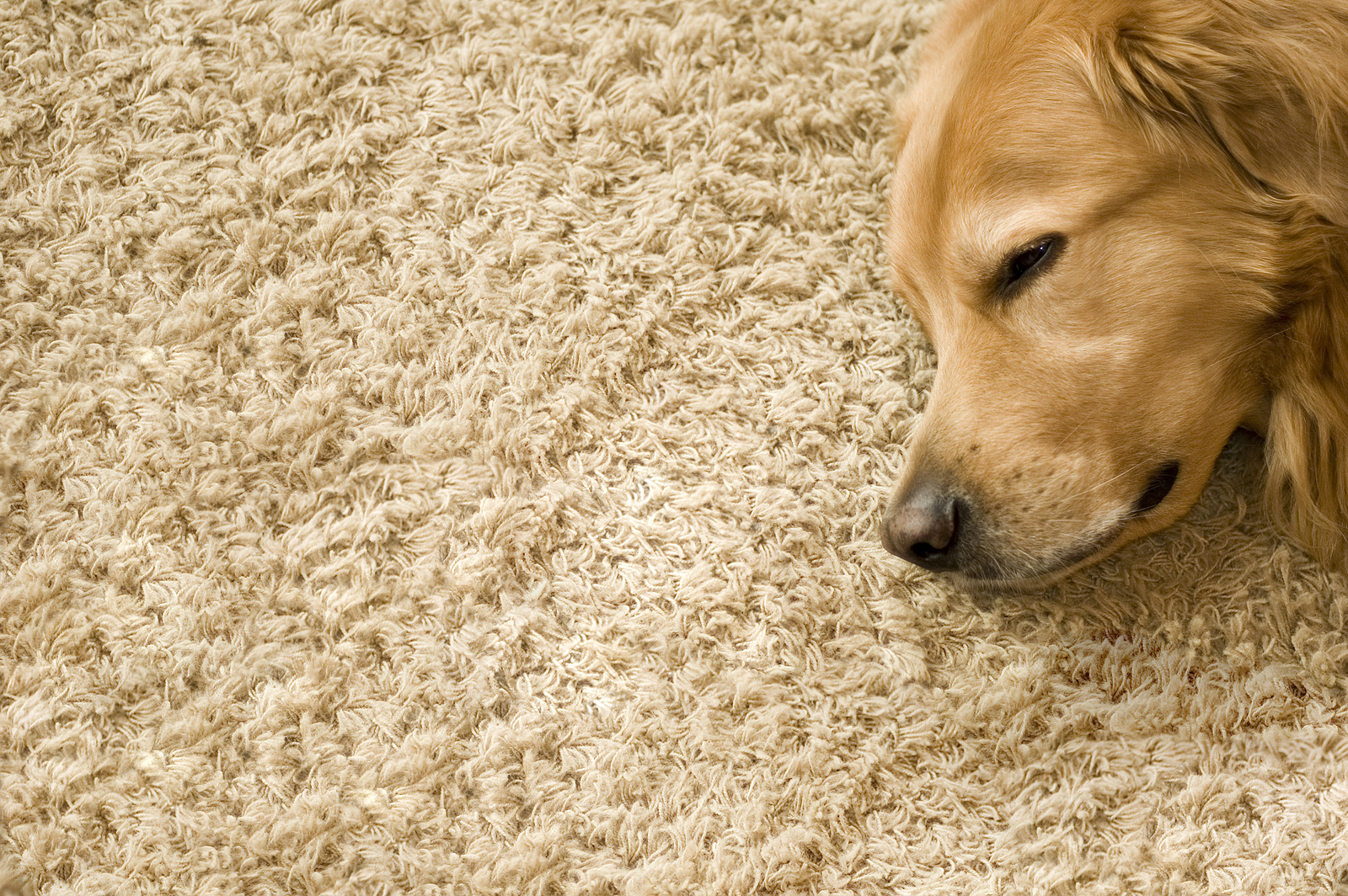 Carpet Cleaners Pets